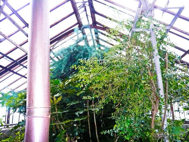 Проект Реконструкции Ботанического сада им. Канта, Купола 1700м2, Калининград, Россия