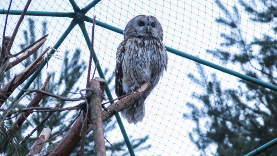 Реабилитационный центр диких птиц в Буквалд